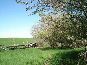 along-the-bruce-trail-mulmur