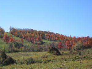 mansfield-ski_autumn